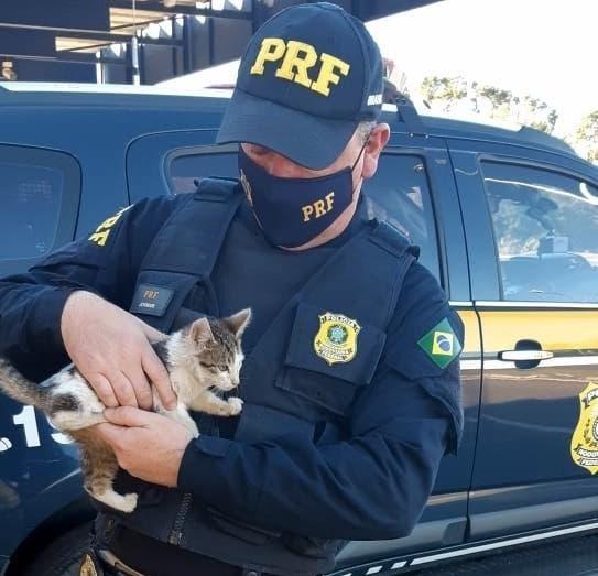 Policiais resgatam gato jogado às margens de rodovia em SC; motorista foi encontrado