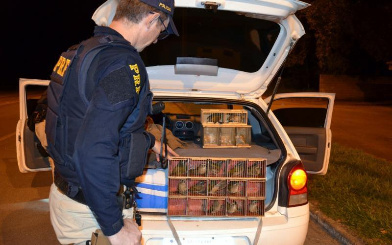 PRF flagra transporte ilegal de pássaros e condutores alcoolizados na BR-470 em Rio do Sul