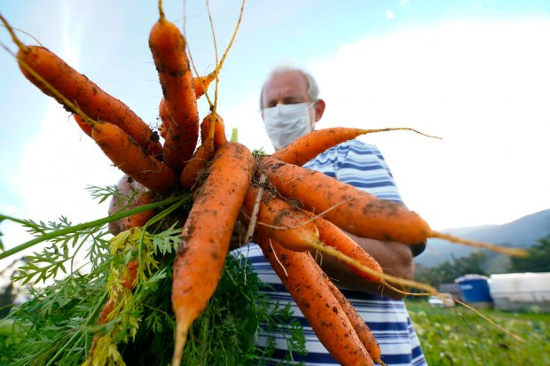 Produção orgânica e agroecologia