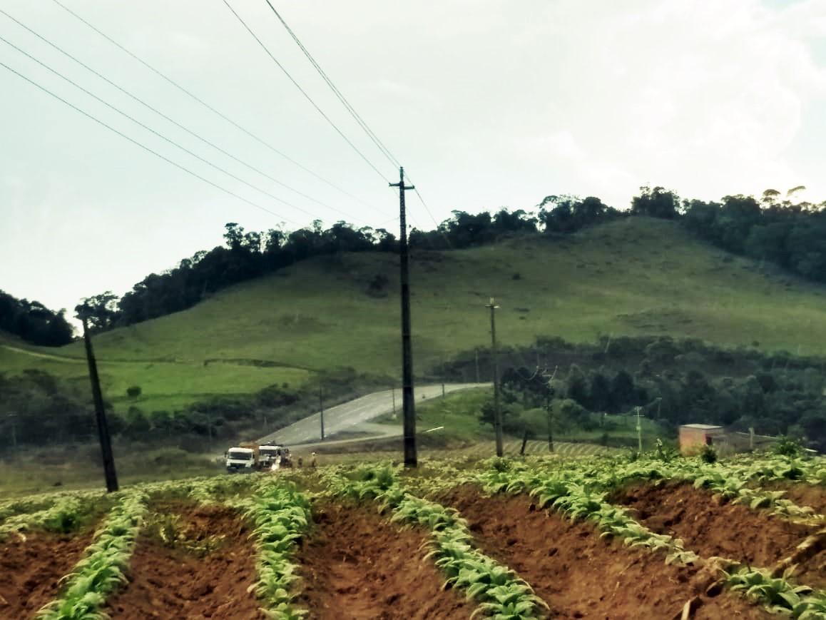 Programa Celesc Rural conclui substituição de 200 quilômetros de cabos protegidos na região de Ituporanga