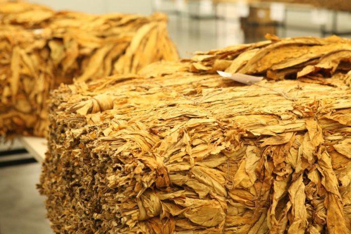 Projeto que prevê reforma tributária deve prejudicar setor fumageiro