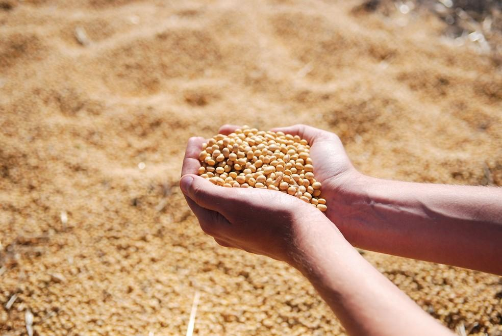 Santa Catarina inicia período de vazio sanitário da soja