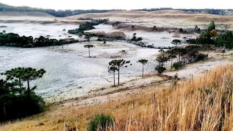 Santa Catarina registra temperaturas negativas e quinta amanhece com geada