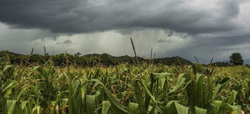 Santa Catarina usa meteorologia para prever ocorrência de doenças nas lavouras