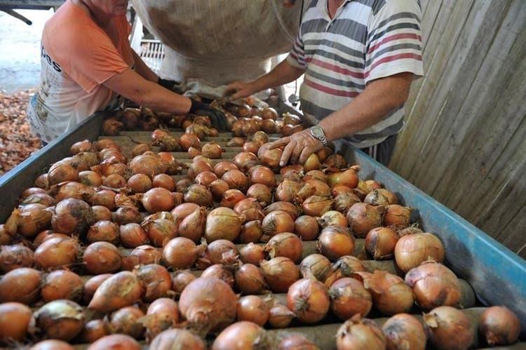 Seca preocupa produtores de cebola de SC e deve comprometer a safra