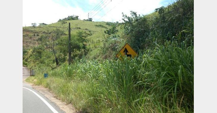 BR-470 deve receber em breve operação para corte de vegetação às margens da rodovia