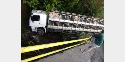 Caminhão carregado de porcos sai da estrada e quase tomba