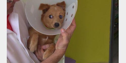Campanha de castração de cães será realizada em Imbuia