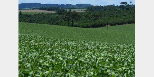 Comércio de herbicida paraquat está proibido no Brasil