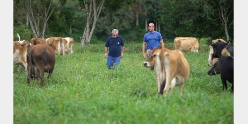 Cravil estima impacto de R$ 200 milhões na agropecuária com aumento do ICMS