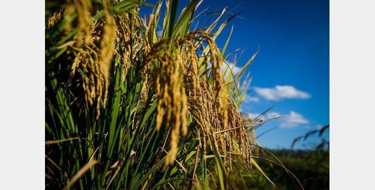 Cravil realiza evento online pra discutir formas de plantio de grãos