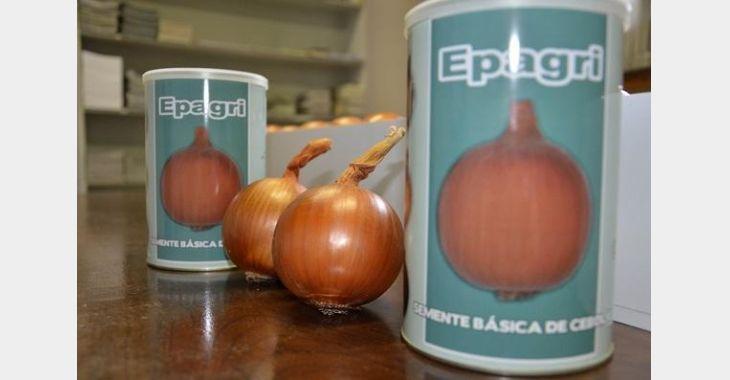 Epagri de Ituporanga apresenta cinco novas variedades de cebola