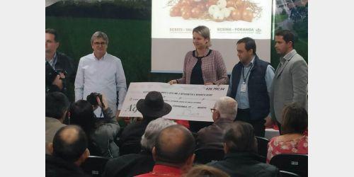 Epagri recebe mais de R$ 420 mil em royalties por cultivares de cebola desenvolvidas em Ituporanga
