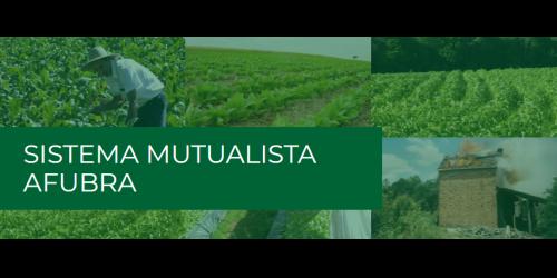 Fumicultores tem até dia 1º de novembro para ingressar no sistema mutualista da Afubra
