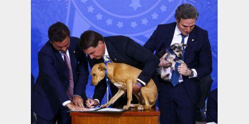 Lei que aumenta pena a maus-tratos a cães e gatos é sancionada