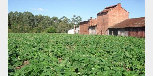 80% dos produtores de tabaco da Região de Ituporanga já receberam os pagamentos do sistema mutualista da Afubra