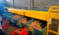 Agricultores questionam classificação da cebola nas cerealistas
