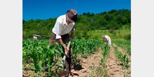 Governo Federal estuda possibilidade de aposentadoria especial para agricultores