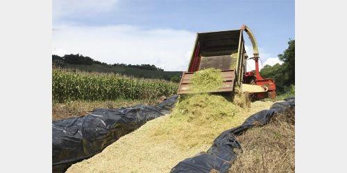 Prefeitura de Vidal Ramos auxilia agricultores na produção de silagem