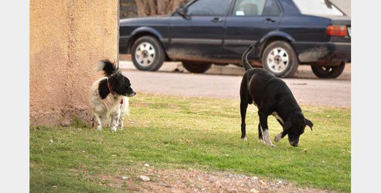 Populares pedem apoio de moradores da região para não deixarem cachorros soltos nas ruas