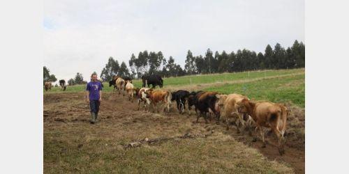 Santa Catarina reduz para 30 dias o tempo para indenizar produtores rurais
