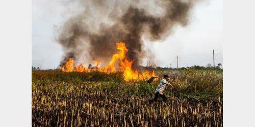 SC tem alerta para alto risco de queimadas nos próximos dias; ocorrências crescem 57% em 2020
