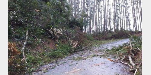 Vidal Ramos registra destelhamento de casas e quedas de árvores com passagem de ciclone